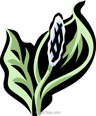 peace lily Royalty Free Vector Clip Art illustration vc032107