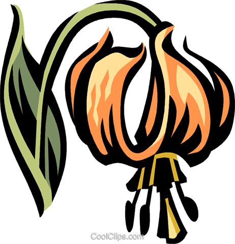 Turk's cap lily Royalty Free Vector Clip Art illustration vc032115