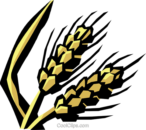 unprocessed grain Royalty Free Vector Clip Art illustration vc032120