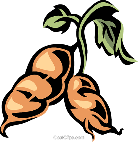 sweet potato Royalty Free Vector Clip Art illustration vc032153