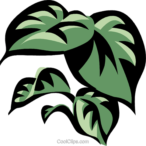 philodendron Royalty Free Vector Clip Art illustration vc032157