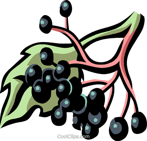 elderberry Royalty Free Vector Clip Art illustration vc032168
