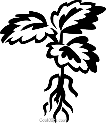 Plant root clip art