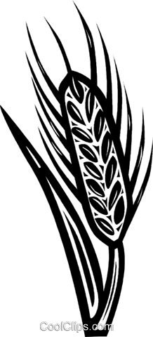 wheat Royalty Free Vector Clip Art illustration vc040621