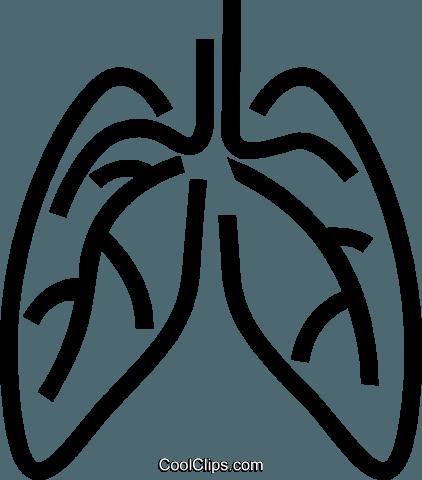 menschliche Lunge Vektor Clipart Bild -vc049071-CoolCLIPS.com