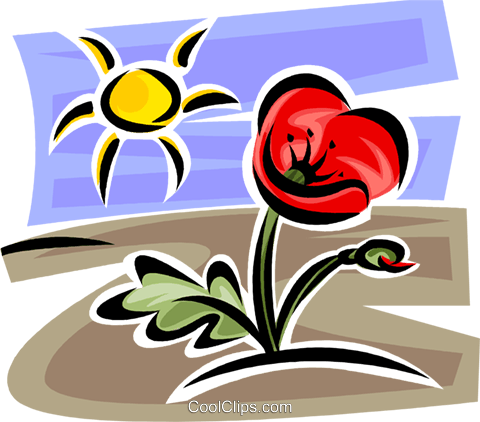 Tulip and sunshine Royalty Free Vector Clip Art illustration vc062709