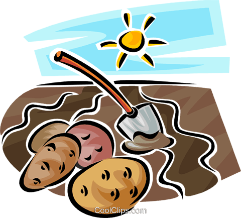 potato Royalty Free Vector Clip Art illustration vc062950