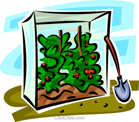tomato plants in a shelter Royalty Free Vector Clip Art illustration vc062955