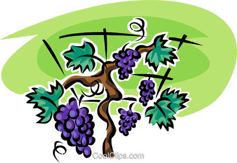grapes on the vine Royalty Free Vector Clip Art illustration vc062962