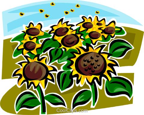 Field of sunflowers Royalty Free Vector Clip Art illustration vc062974