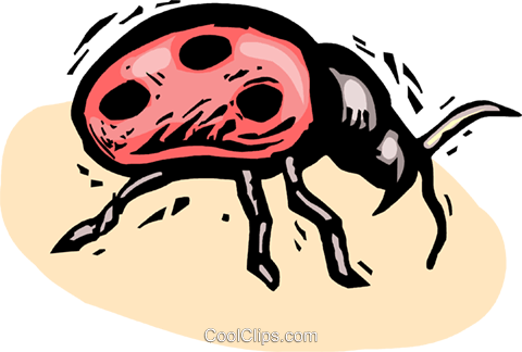 beetle Royalty Free Vector Clip Art illustration vc063850