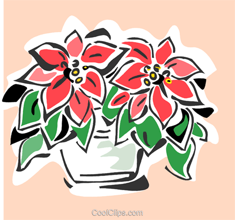 poinsettia Royalty Free Vector Clip Art illustration vc064862