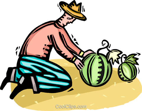 farmer tending to his watermelons Royalty Free Vector Clip Art illustration vc065802