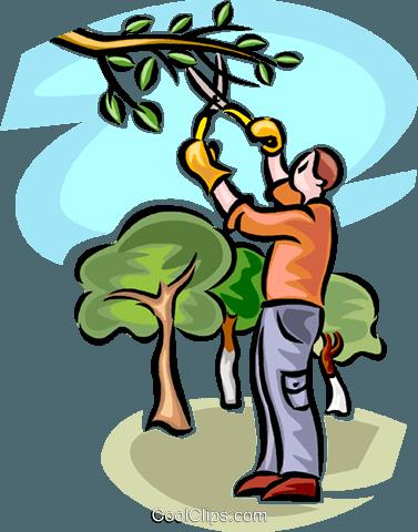 man pruning a tree Royalty Free Vector Clip Art ...