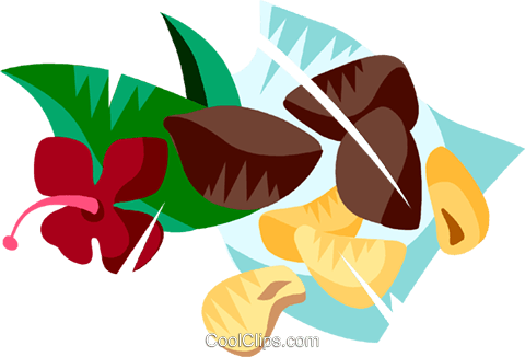 Brazil nuts Royalty Free Vector Clip Art illustration vc111165