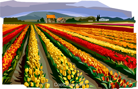Fields of flowers, Netherlands Royalty Free Vector Clip Art illustration vc112371