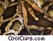 Snakes Stock photo