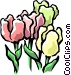 Colorful tulips Vector Clip Art picture