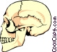 The human skull Vector Clipart image