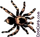 Tarantula Vector Clipart picture
