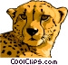 cheetah Vector Clipart picture