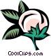 cotton plant Vector Clip Art image