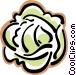 head of lettuce Vector Clip Art image