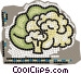cauliflower Vector Clip Art picture